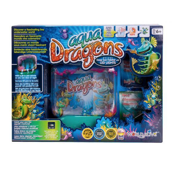 Aqua dragons front