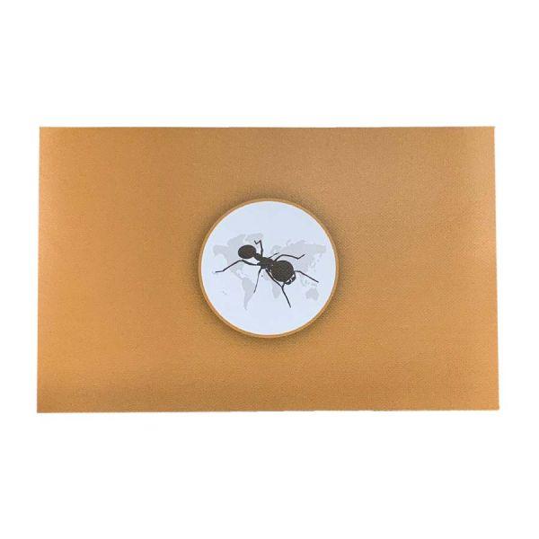 Ant's Kingdom Antcover