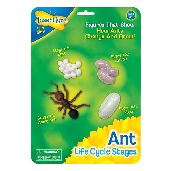 mieren levenscyclus, ant life cycle
