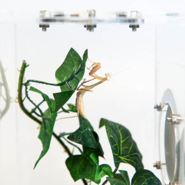 Medium Insecten verblijf, 10x10x15