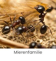 Mierenfamilie