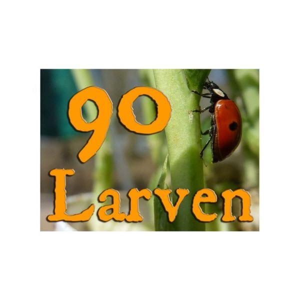 90 larven lieveheerstbeestje