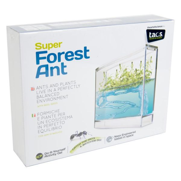 Frontview Super Forest Ant