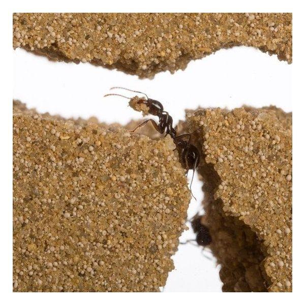 ant inside t-farm, lasius